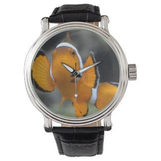 clownfish facing front watch