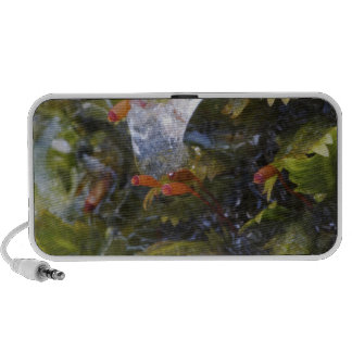 Club moss and ice, Great Smoky Mountains Mini Speakers