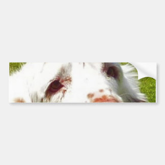 Clumber_Spaniel_eyes Bumper Sticker