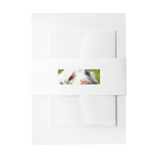 Clumber_Spaniel_eyes Invitation Belly Band