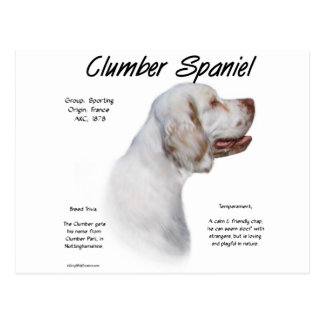 Clumber Spaniel History Design Postcard