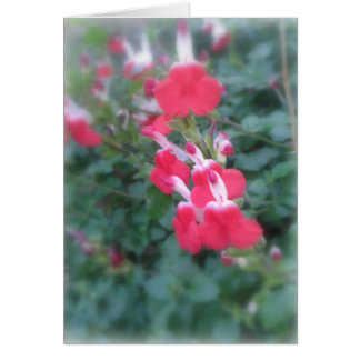 Cluster of pink flowers, blank greeting card
