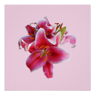 Cluster of Stargazer Lilies Poster