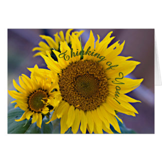 Clustered Sunflowers Close-Up Photograph Card