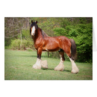 Clydesdale Birthday Card