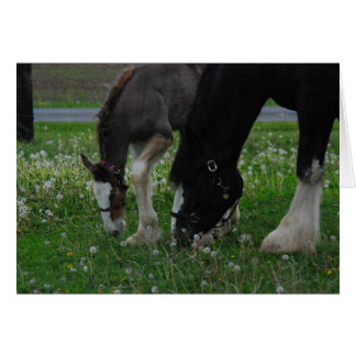 Clydesdale Mare & Colt Card