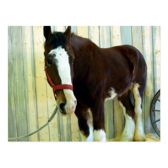 Clydesdale Postcard