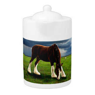 Clydesdale Storm