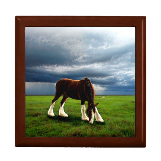 Clydesdale Storm Gift Box