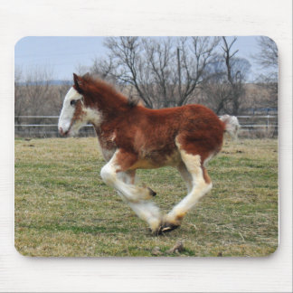 Clydesdale stud colt running mouse pad
