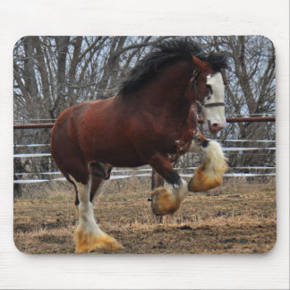 Clydesdale stud colt running mousepad
