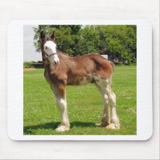 clydesdale stud mousepads