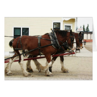 Clydesdale Team, Heritage Park, Calgary, Alberta Card