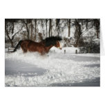 Clydesdale's Snowy Run