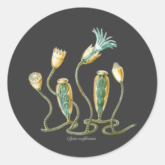 Clytia noliformis classic round sticker