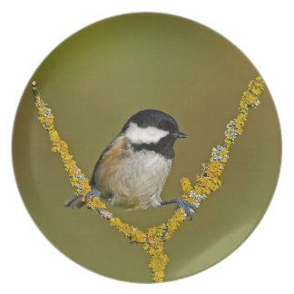 Coal Tit Bird Resting Plate