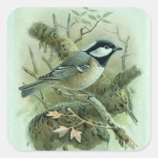 Coal Titmouse Vintage Bird Illustration Square Sticker