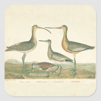 Coastal Antique Birds Audubon Marsh Square Sticker