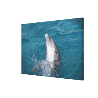 Coastal Bottlenose Dolphin Stretched Canvas Print