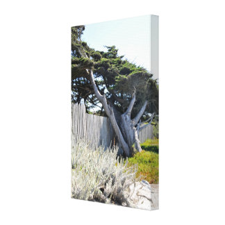 Coastal Cypress Trees Wrapped Canvas Gallery Wrap Canvas