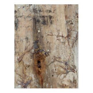 Coastal Driftwood Picture Postcard