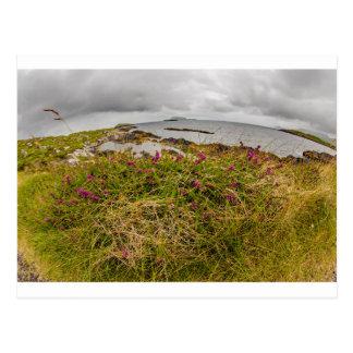"""Coastal flower"" postcard"