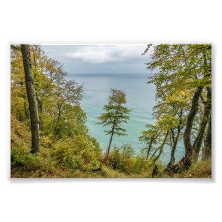 Coastal forest on the Baltic Sea coast Photo Print