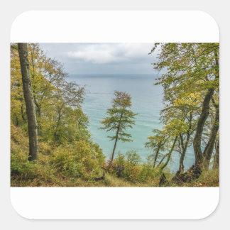 Coastal forest on the Baltic Sea coast Square Sticker