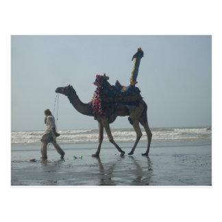 Coastal tribal Camel.JPG Postcard