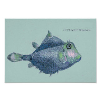 Coastal - vintage tropical fish poster