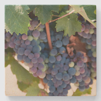 Coaster / Sandstone - Grapes on the Vine Stone Coaster