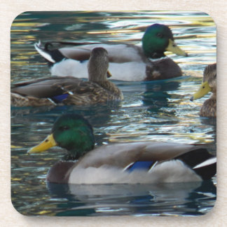 Coaster Set - Duck, Duck, Duck, Duck
