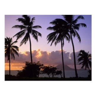 Coastline St. Kitts Postcard