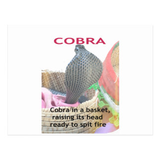 Cobra in a Basket Ready to spit Fire Postcard