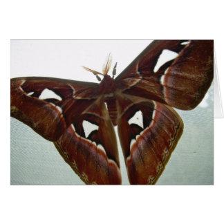 Cobra Moth Note Card