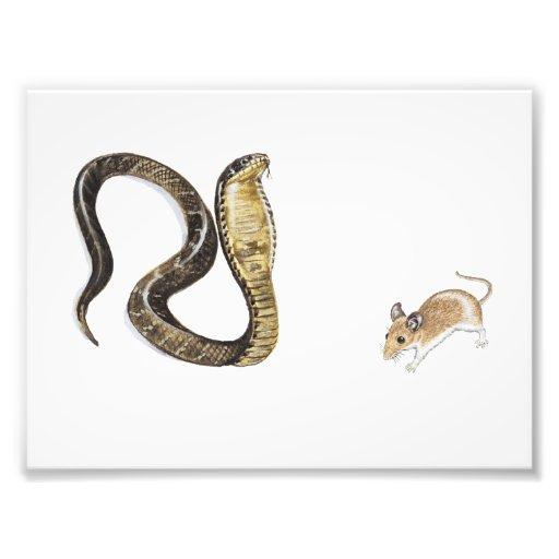 Cobra vs Rat Photograph