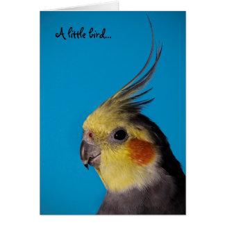 Cockatiel, A little bird... Card
