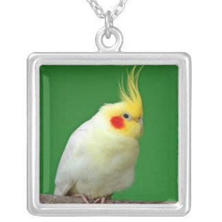 Cockatiel bird beautiful photo pendant, necklace