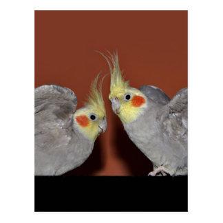Cockatiel Duo Postcard