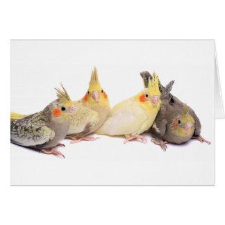 Cockatiels Card