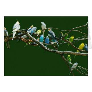 Cockatiels N Parakeets Card