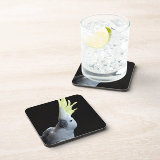 Cockatoo Coaster