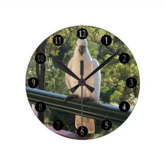Cockatoo in Australia Wall Clock