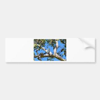 COCKATOO IN TREE RURAL QUEENSLAND AUSTRALIA BUMPER STICKER
