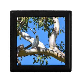 COCKATOO IN TREE RURAL QUEENSLAND AUSTRALIA SMALL SQUARE GIFT BOX