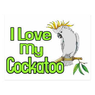 Cockatoo Love Postcard