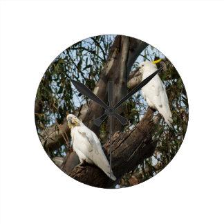 Cockatoos Round Clock