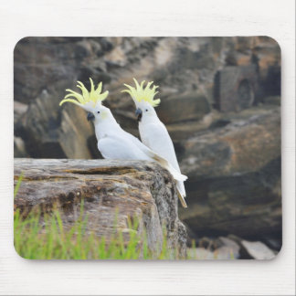 Cockatoos Mouse Pad
