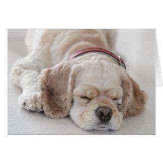Cocker spaniel dog sleeping card