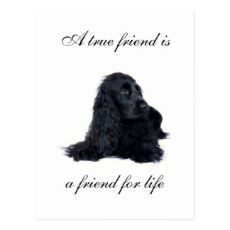 Cocker Spaniel friendship Postcard